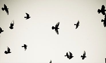 Flock of Birds Flying in the Air